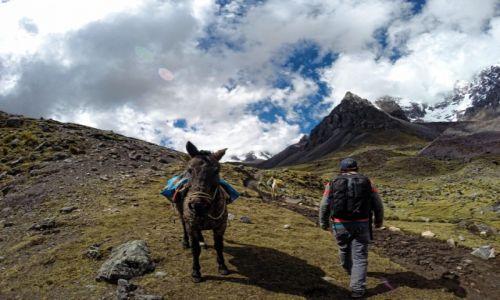 Zdjęcie PERU / Cusco / W okolicach szczytu Ausangate / Podczas trekkingu w Andach