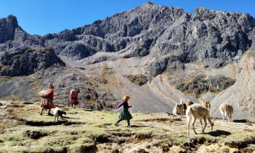 Zdjęcie PERU / Cusco / Andes / Lares trek i lamy