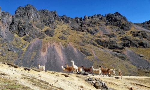 Zdjecie PERU / Cusco / Na szlaku / Peruwiańskie Andy