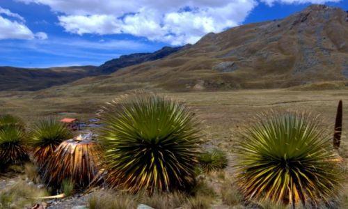 Zdjecie PERU / Bia�e Kordyliery / Park Narodowy Huascar�n / Park Narodowy H