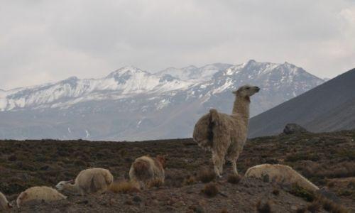 Zdjecie PERU / Chivay / W drodze / W drodze do Chi