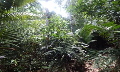 Zdjęcie PERU / Iquitos / Amazonia / Bogata roślinność