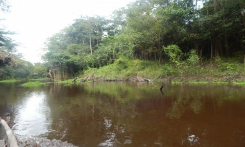 Zdjecie PERU / Iquitos / Amazonia / Selva
