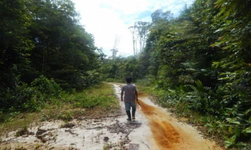 Zdjecie PERU / Iquitos / Amazonia / Przez d�ungl�
