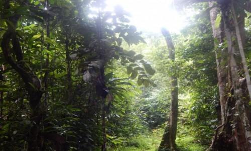 Zdjecie PERU / Iquitos / Amazonia / G�eboko w puszc