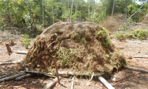 Zdjecie PERU / Iquitos / Amazonia / Prawie jak mrowisko