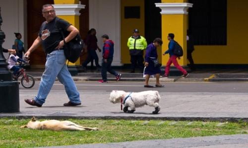 Zdjęcie PERU / Lima / Plaza de Armas / Co to za tupanie z tyłu???