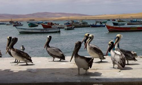 Zdjecie PERU / Paracas / port w wiosce na półwyspie / Defilada