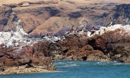 PERU / Paracas / półwysep, park narodowy / Wyspa pelikanów