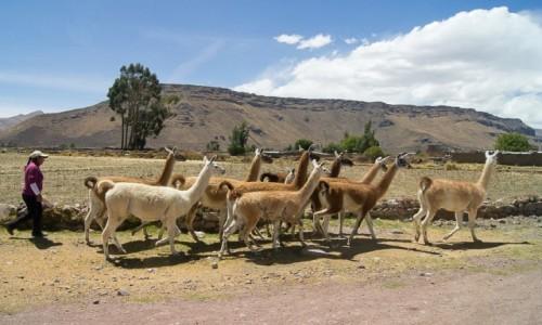 Zdjęcie PERU / Arequipa / Colca Valley / Na spacer