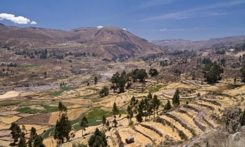 Zdjęcie PERU / Arequipa / Colca Valley / w Colca Valley