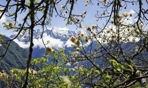PERU / Cusco / Choquequirao / Nasłoneczniony stok posiadał swoisty mikroklimat