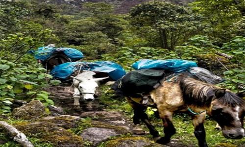Zdjecie PERU / Vilcabamba / Vilcabamba / Moja karawana  w drodze do legendarnej  Vilcabamby