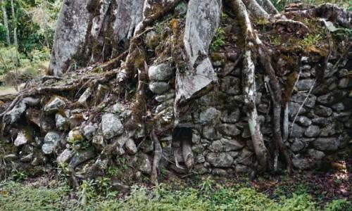 Zdjecie PERU / Vilcabamba / Vilcabamba / Olbrzymie korzenie oplatające ściany pałacu w Wielkiej Vilcabambie,
