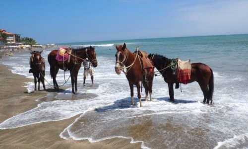 Zdjecie PERU / Andy / Peru / Horses in the Sea