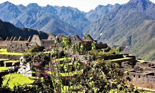 Zdjecie PERU / Andy / Machu Picchu / KOKA