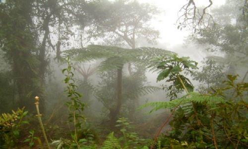 Zdjecie PERU / Środkowe Andy / Okolice miejscowości Acomayo, przełęcz Carpish / W lesie chmurny