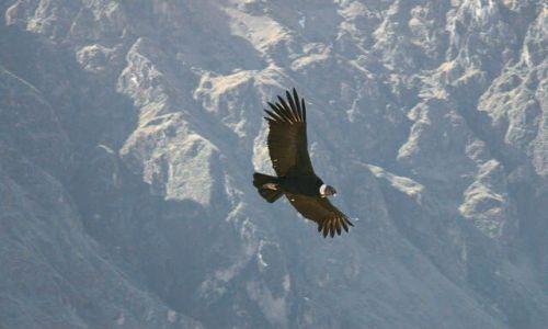 Zdjecie PERU / brak / W DRODZE DO M>P> / El Condor Passa