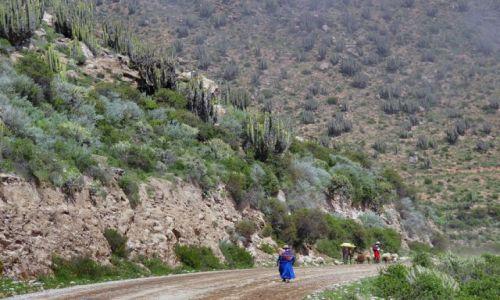 Zdjecie PERU / brak / Okolice kanionu COLCA / W drodze do Boliwi