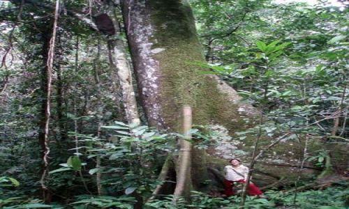Zdjęcie PERU / amazonia (Loreto) / okolice Iquitos / drzewko