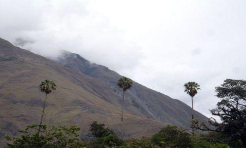 Zdjecie PERU / brak / Okolice wioski Santa Maria. / 3 Palmy