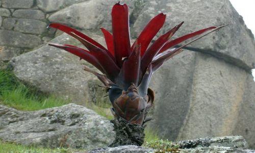 PERU / brak / Machu Picchu / Czerwony element wsrod ruin Machu Picchu