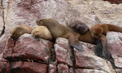 Zdjęcie PERU / brak / Islas Ballestas / Odpoczywamy