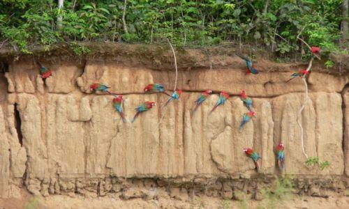 Zdjęcie PERU / brak / Madre De Dios / Ary na Colpie