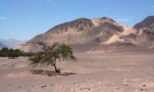 Zdjęcie PERU / brak / Nazca / Bajeczne kolory