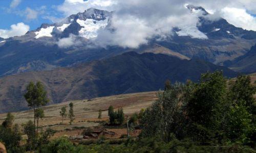 Zdjęcie PERU / okolice Cusco / Kordyliery / Eukaliptusy...a wyglądają jak topole ;)