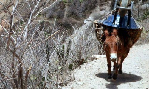 Zdjecie PERU / Andy / kanion Colca / przewrotny muł ...