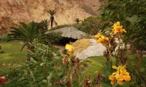 Zdjecie PERU / Andy / kanion Colca - Oasis / Niespodzianka...na dnie kanionu :D