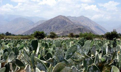 Zdjecie PERU / Andy / brak / Kaktusowo