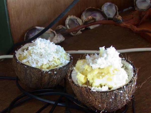 Zdjęcia: środek atolu ( 8 km do wioski) pole namiotowe, Wyspa Fakarava, Palma to jedzenie, POLINEZJA FRANCUSKA