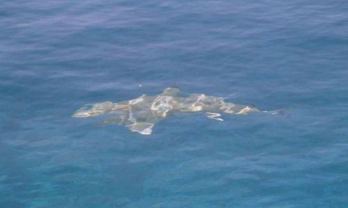 Zdjęcie POLINEZJA FRANCUSKA / Wyspa Fakarava / środek atolu ( 8 km do wioski) pole namiotowe / Dyżurny Rekin