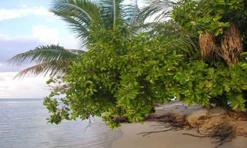 Zdjęcie POLINEZJA FRANCUSKA / Tahaa / Przy plaży / Przyprawy do krabów