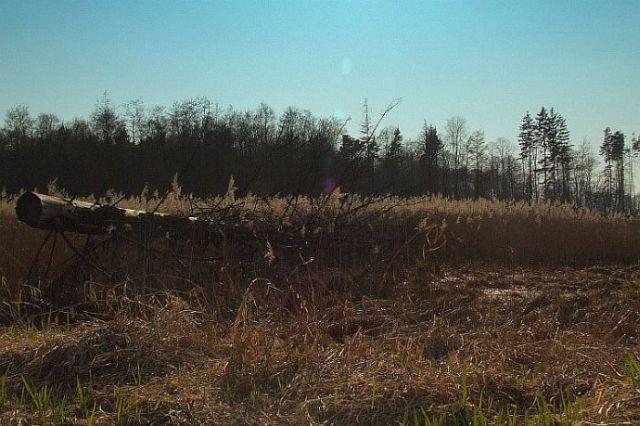Zdjęcia: nizina śląska, w.opolskie, drzewo, POLSKA