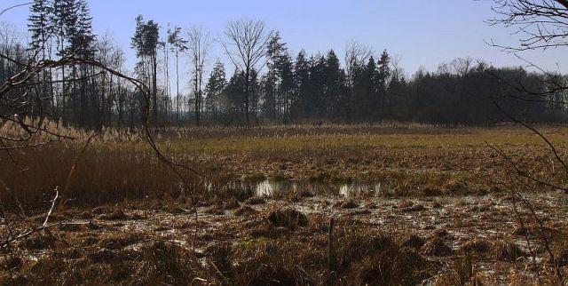 Zdjęcia: nizina śląska, w.opolskie, bagno, POLSKA