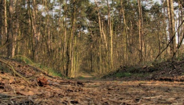 Zdjęcia: nizina śląska, w.opolskie, trasa rowerowa, POLSKA