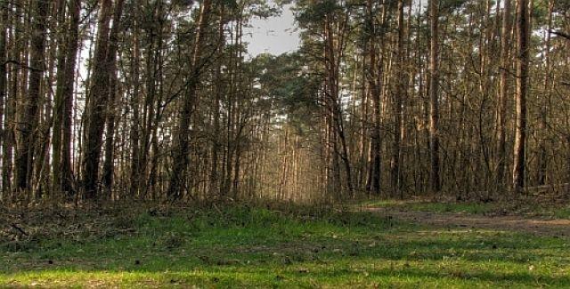 Zdj�cia: nizina �l�ska, w.opolskie, �cie�ka w lesie, POLSKA