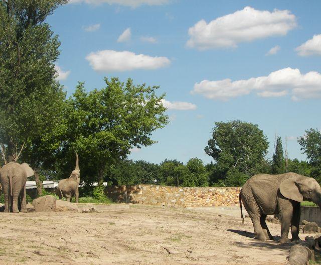 Zdjęcia: warszawa, Mazowsze, słonie/zoo, POLSKA