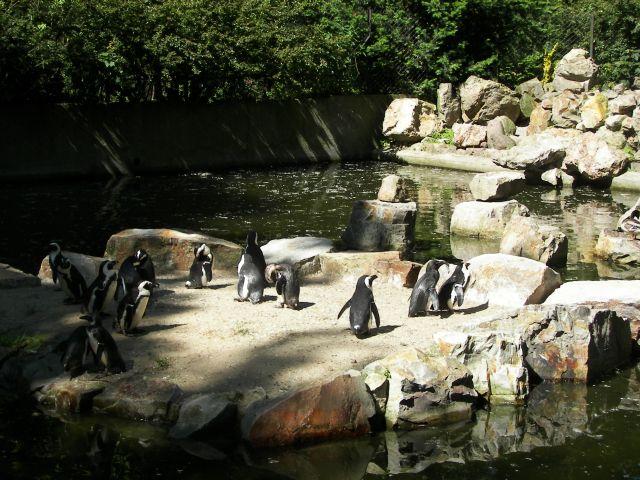 Zdjęcia: Warszawa, Mazowsze, pingwiny, POLSKA