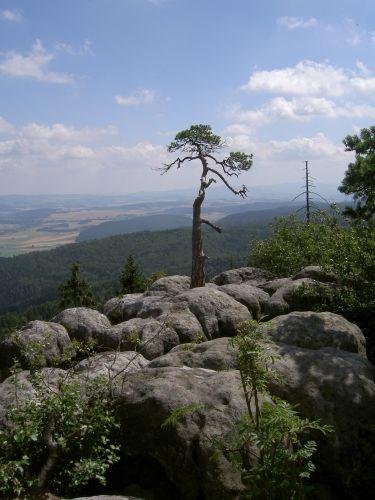 Zdj�cia: STRZELINIEC-KAR��W, G�RY STO�OWE, SAMOTNA , POLSKA