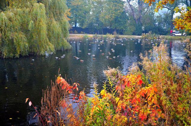 Znalezione obrazy dla zapytania Jesień w Łańcucie