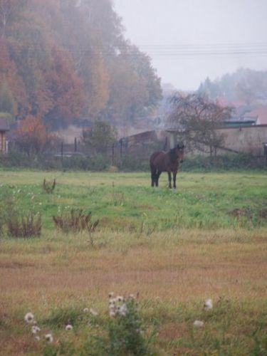 Zdjęcia: Halemba, Śląsk, Halemba 4, POLSKA