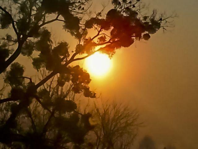 Zdjęcia: Łomianki, Mazowsze, Wschód słońca przy -24 C ;) , POLSKA