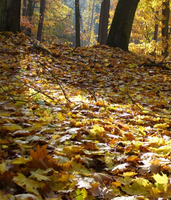Zdjęcia: Drawieński Park Narodowy, Po prostu polsko jesiennie, POLSKA
