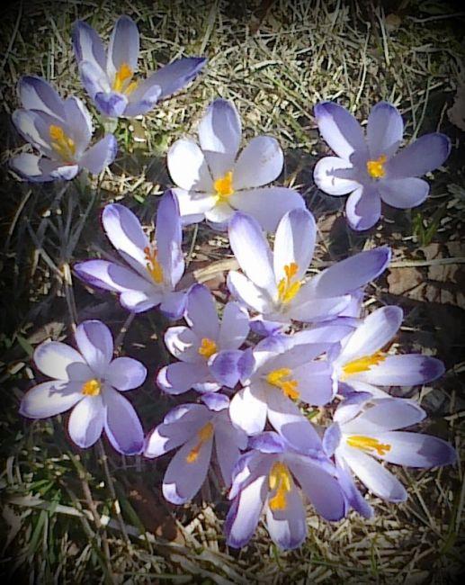 Zdjęcia: łąka, Cyrla, Wiosna, POLSKA
