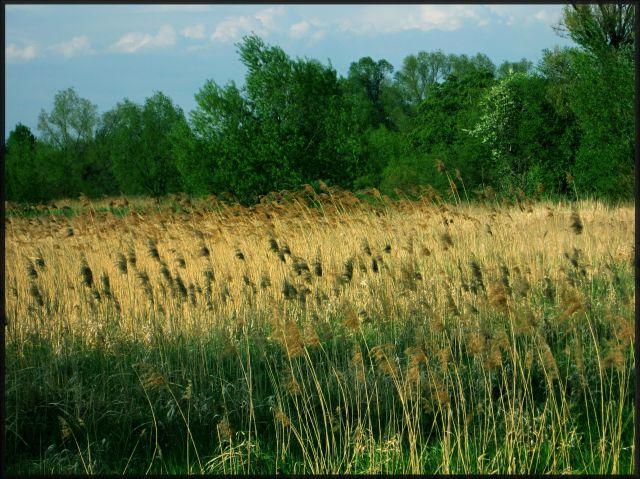 Zdjęcia: okolice Legnicy, dolnośląskie, majowo, POLSKA