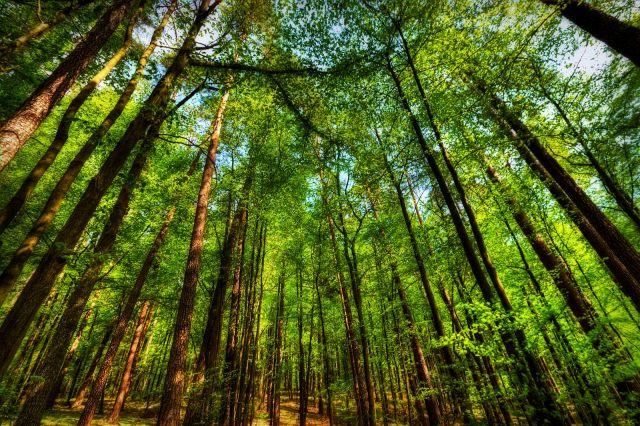 Zdjęcia: Ruciane Nida, Mazury, W tych mazurskich lasach, POLSKA
